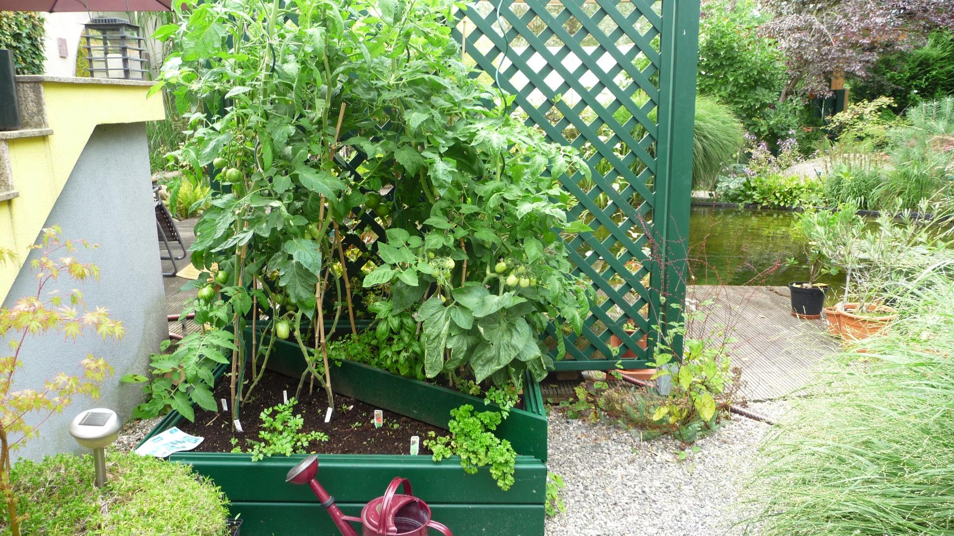 Nouveaut au jardin chez pia et alain - Petit jardin potager carre ...